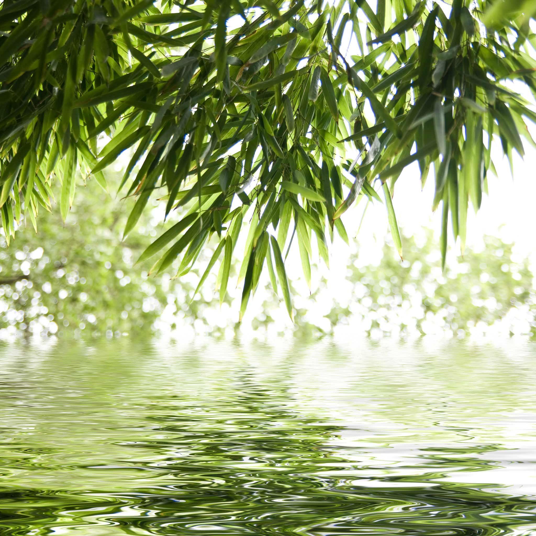 Bamboo Background Image